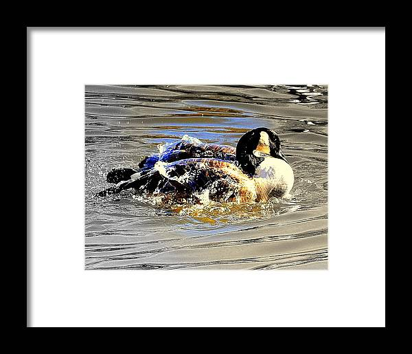 Lake View Framed Print featuring the digital art Spring Bath by Aron Chervin