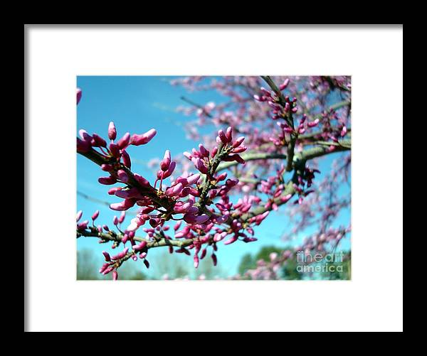 Flowers Framed Print featuring the photograph Spring Bliss by Kathy Bucari