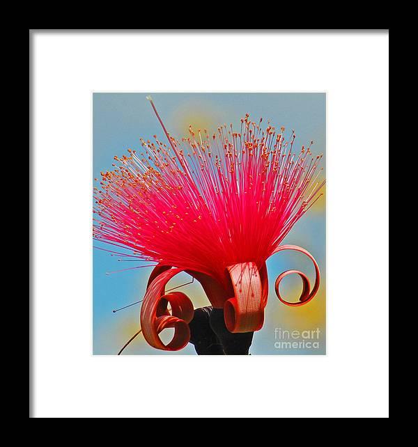 Flower Framed Print featuring the photograph Spring Bloom by Allan Einhorn