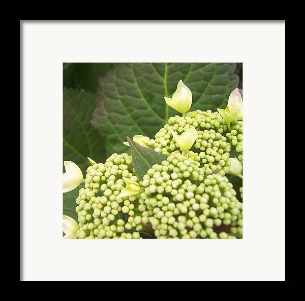 Green White Flowers Plants Garden Framed Print featuring the photograph Spring Blooms by Anna Villarreal Garbis