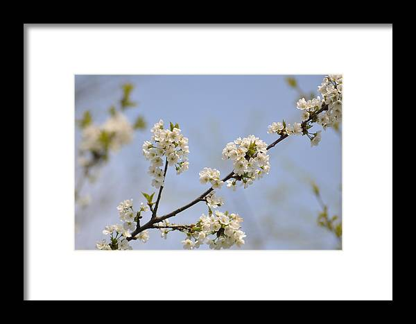 Spring Framed Print featuring the photograph Spring Blossom by Gwen Allen