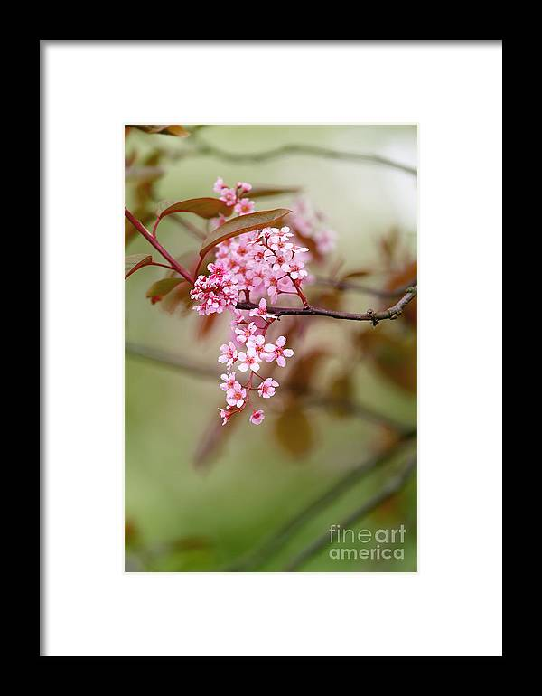 Floral Framed Print featuring the photograph Spring Blossom by LHJB Photography