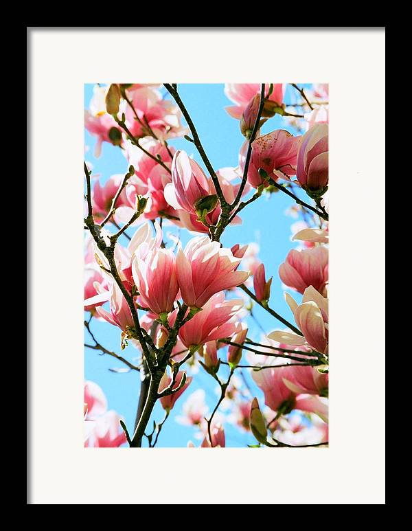 Spring Framed Print featuring the photograph Spring Blossoms by Caroline Clark