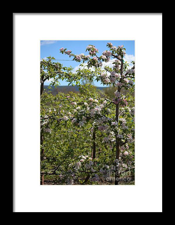 Blossoms Framed Print featuring the photograph Spring Blossoms Day by Carol Groenen