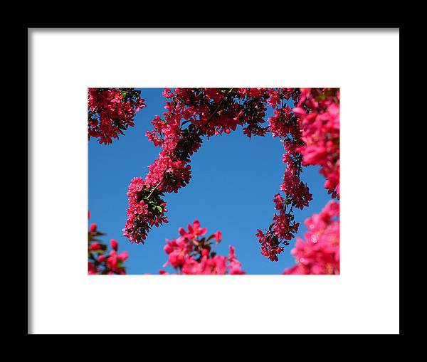Spring Framed Print featuring the photograph Spring Blossoms by Juergen Roth