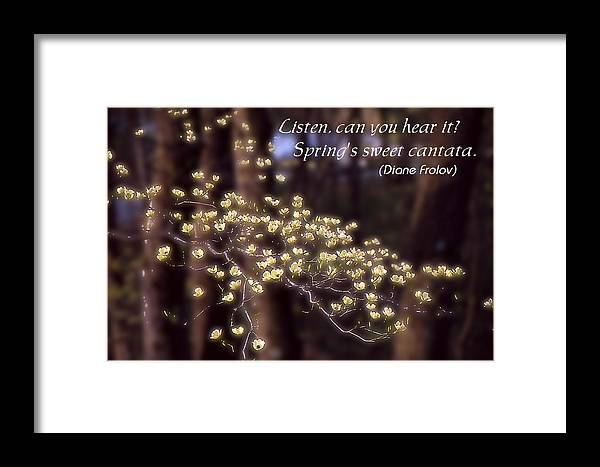 Spring Framed Print featuring the photograph Spring Blossoms Poster by Roger Soule