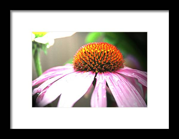 Flowers Framed Print featuring the photograph Spring Colors by Becca Wilcox