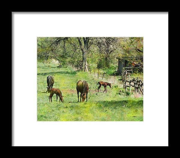 Spring Colts Framed Print featuring the digital art Spring Colts by John Beck