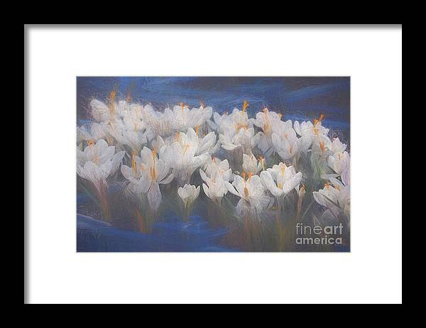 Crocus Framed Print featuring the mixed media Spring Crocuses by Helen White