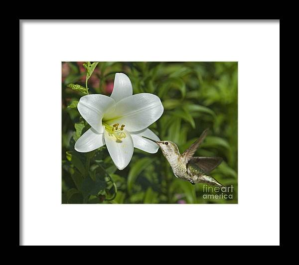 Floral Framed Print featuring the photograph Spring Fling by Chuck Brittenham