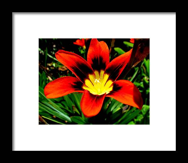 Flowers. Framed Print featuring the photograph Spring Flower by Joyce Woodhouse