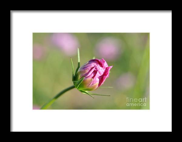 Flower Spring Pink Savannah Green Bud Pretty Beauty Nature Color Framed Print featuring the pyrography Spring Flower Savannah, Ga by Heather Fiedler