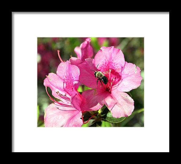 Flower Photography Framed Print featuring the photograph Spring Flowers 3 by Evelyn Patrick
