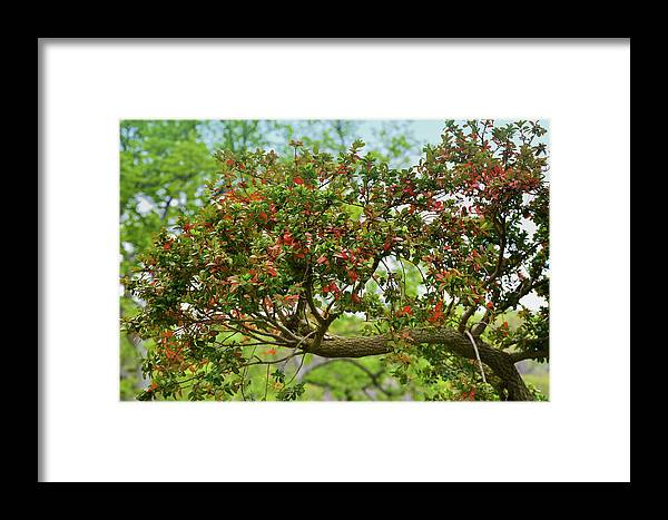 Isabela Cocoli Framed Print featuring the photograph Spring Foliage by Isabela and Skender Cocoli
