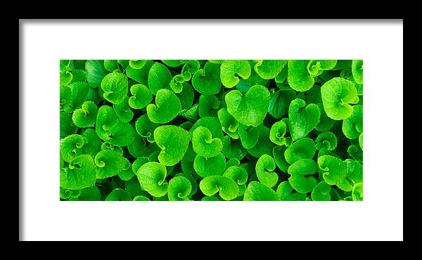 Green Framed Print featuring the photograph Spring Green by Leah Dore