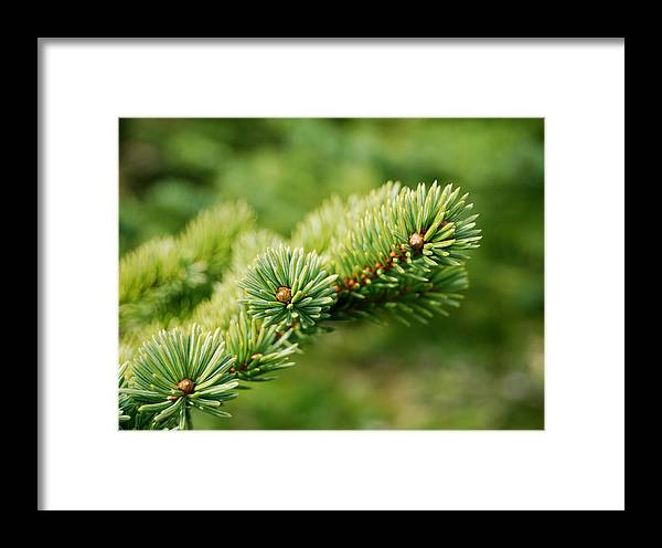 Spring Framed Print featuring the photograph Spring Green by Marilynne Bull