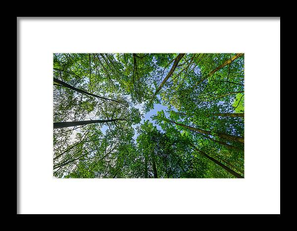 Trees Framed Print featuring the photograph Spring Gums by M E Cater