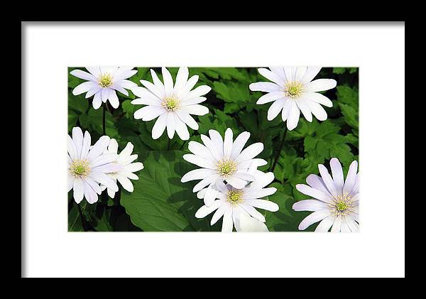Flower Framed Print featuring the photograph Spring Has Sprung by Kat Dee