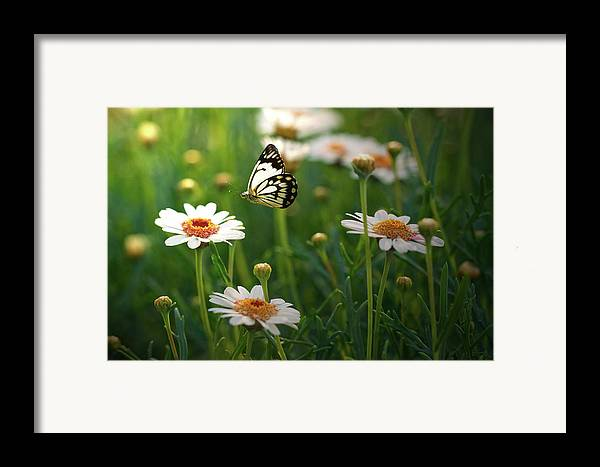 Horizontal Framed Print featuring the photograph Spring In Air. by Photos by Shmelly