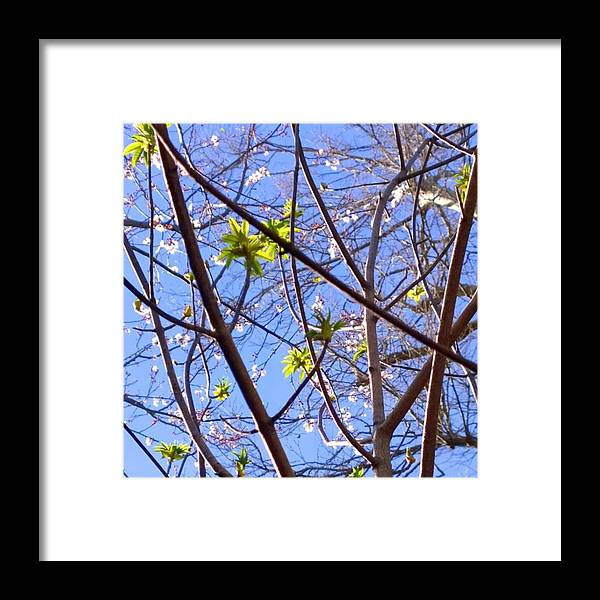 Seasons Framed Print featuring the photograph Spring Leaves #seasons #trees by Shari Warren
