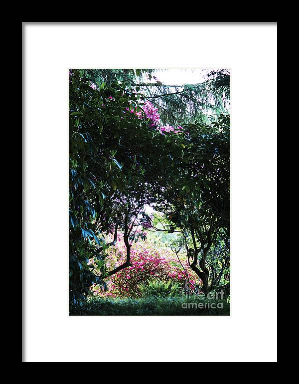 Nature Framed Print featuring the photograph Spring Park by Michelle Williamson