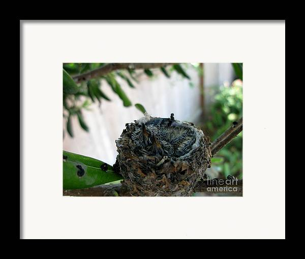 Baby Hummingbirds Framed Print featuring the photograph Spring by PJ Cloud