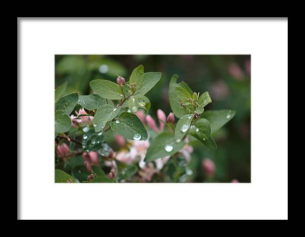 Rain Framed Print featuring the photograph Spring Showers 5 by Antonio Romero