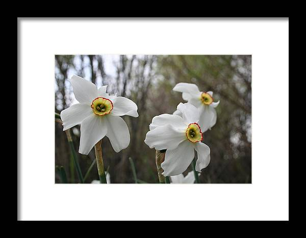 Flowers Framed Print featuring the photograph Spring by Susan Pedrini
