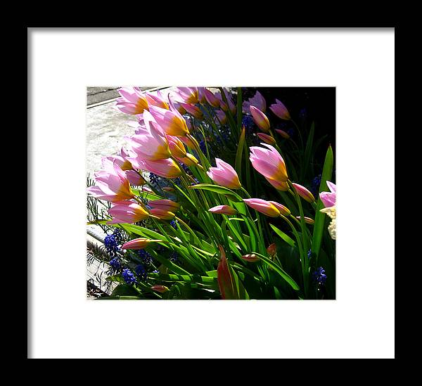 Flowers Framed Print featuring the photograph Spring Tenderness by Aliza Souleyeva-Alexander
