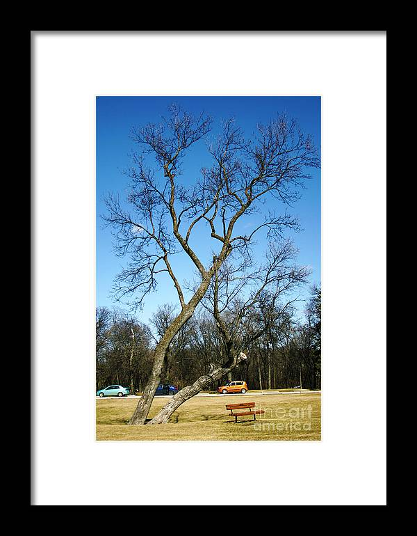 Tree Framed Print featuring the photograph Spring Tree by Mopics Eu