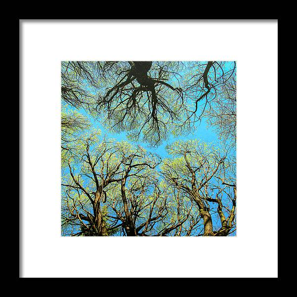 Landscape Framed Print featuring the photograph Spring Trees by Vladimir Kholostykh