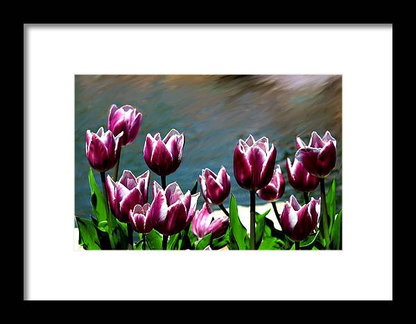 Tulip Framed Print featuring the photograph Spring Tulips 1 by Jim Darnall