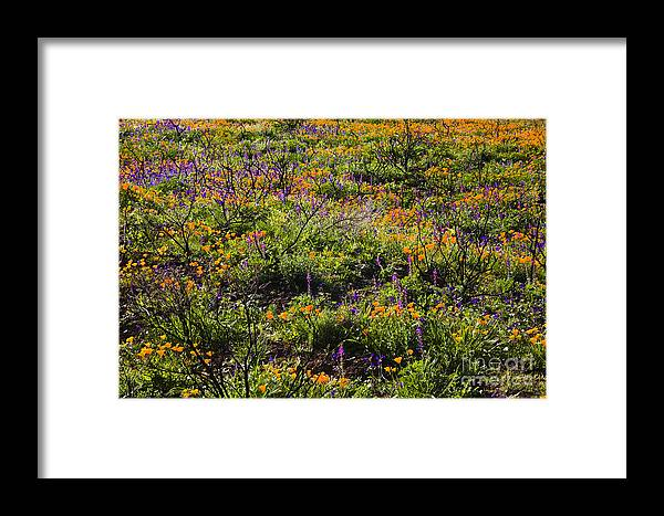 Santa Monica Mountains Framed Print featuring the photograph Spring Wildflowers by Greg Clure
