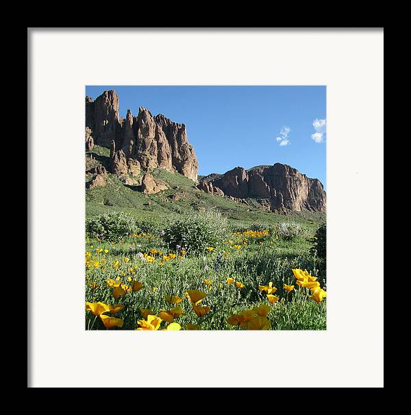 Landscape Framed Print featuring the photograph Springflowers by Gloria Byler