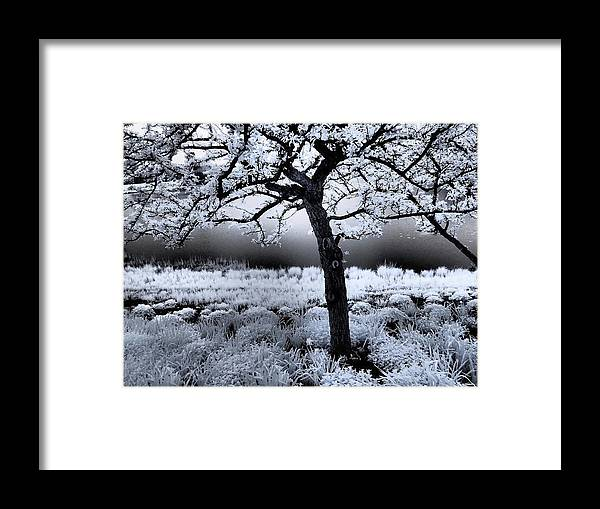 Infrared Framed Print featuring the photograph Springtime In Infrared by Don Zawadiwsky
