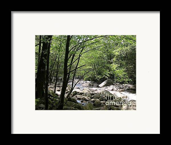 Nature Framed Print featuring the photograph Springtime In The Smoky Mountains by Barb Montanye Meseroll