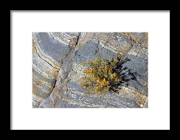Framed Print featuring the photograph Sprouting Rock by Eric Rosenwald