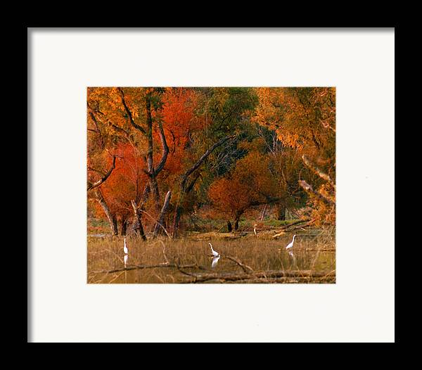 Landscape Framed Print featuring the photograph Squaw Creek Egrets by Steve Karol