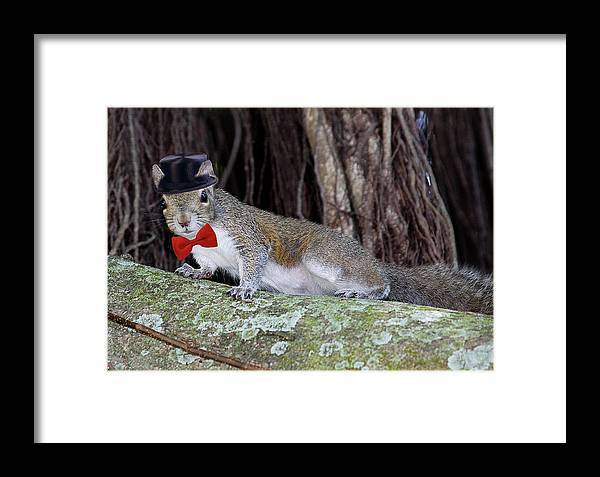 Squirrel Framed Print featuring the photograph Squirrel Dressed by Francesco Roncone