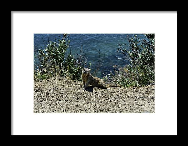 Squirrel Framed Print featuring the photograph Squirrel Looking Back Over His Shoulder On The Coast by DejaVu Designs