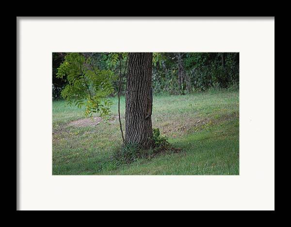 Wildlife Framed Print featuring the photograph Squirrel On It Way Down From Looking For Walnuts by Richard Botts