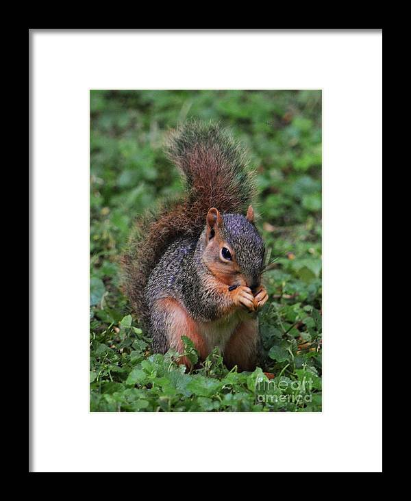 Squirrel Art Animal Portrait Outdoors Nature Cute Close Up Nature Garden Visitor Adorable Vertical Vision Canvas Print Metal Frame Wood Print Poster Print Available On T Shirts Tote Bags Mugs Throw Pillows Shower Curtains Spiral Notebooks And Phone Cases Framed Print featuring the photograph Squirrel Portrait # 3 by Marcus Dagan