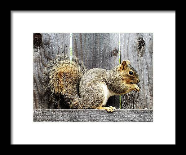 Photographs Framed Print featuring the photograph Squirrel - Snack Time by Shawn Brandon
