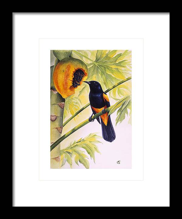Chris Cox Framed Print featuring the painting St. Lucia Oriole And Papaya by Christopher Cox
