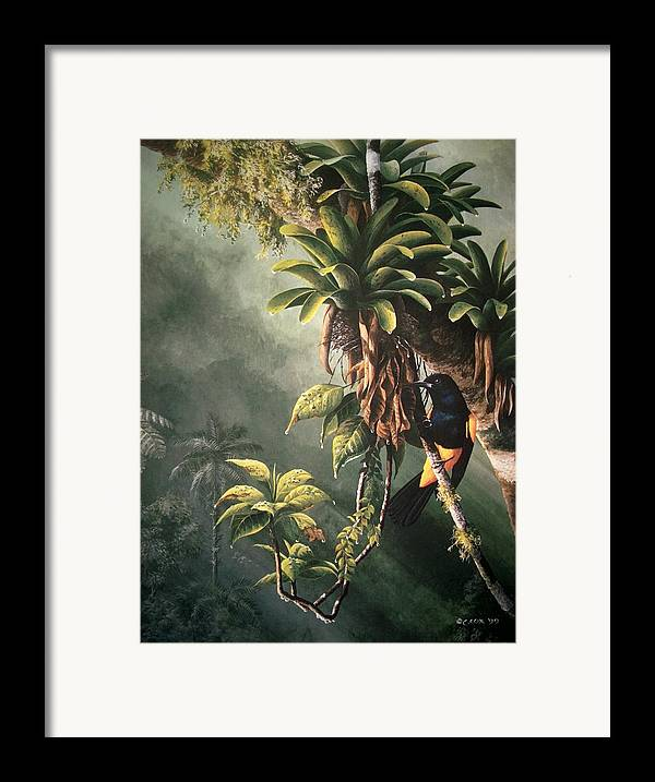 Chris Cox Framed Print featuring the painting St. Lucia Oriole In Bromeliads by Christopher Cox