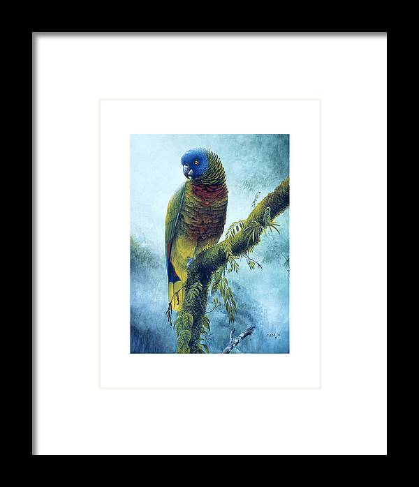 Chris Cox Framed Print featuring the painting St. Lucia Parrot - Majestic by Christopher Cox