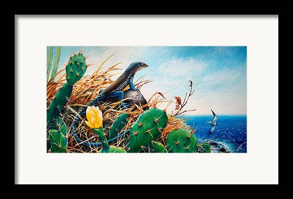 Chris Cox Framed Print featuring the painting St. Lucia Whiptail by Christopher Cox