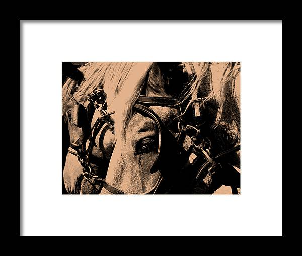 Horse Framed Print featuring the photograph Stage Coach Horses by Wayne Potrafka