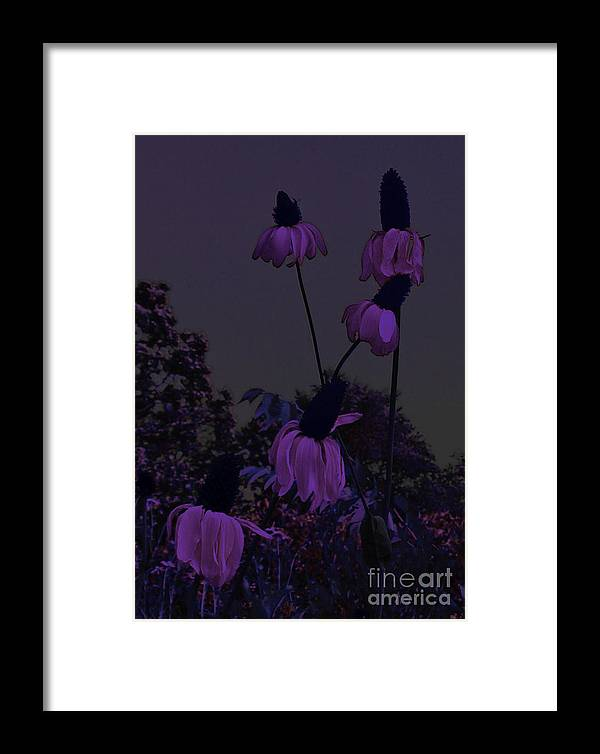 Daisy Framed Print featuring the photograph Stairway To Heaven by Scott Heister