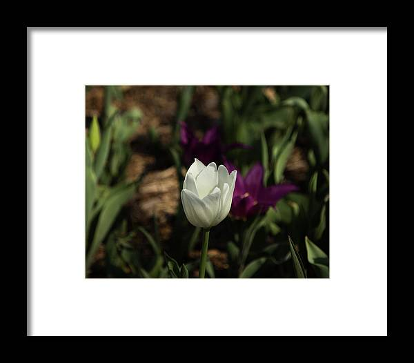 White Framed Print featuring the photograph Stand Out by Jordan Neal